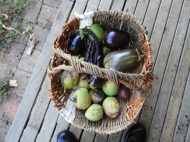 Mangoes, eggplant, beans and figs