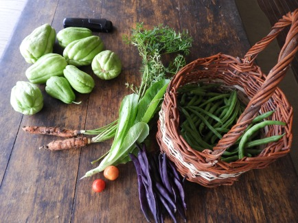 Morning's harvest