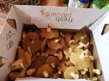 Slippery Jack mushrooms