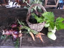 Fresh vegetables #organic