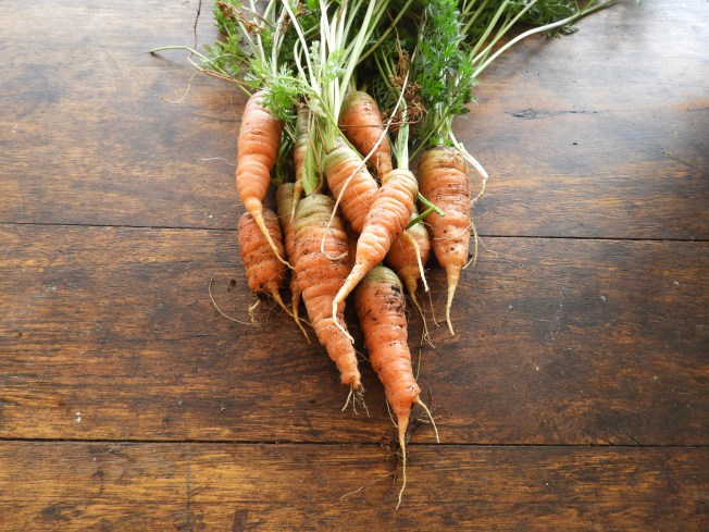 Carrots #sustainable #foodismedicine
