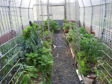 Summer crop starting to grow #organic #sprayfree #nature