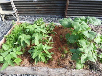 Squash, beans, carrots, beetroot #organic #natural