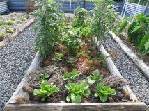 Lettuce, tomato, beetroot, beans, carrots #organic #sustainable
