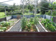 The little greenhouse #healthyfood